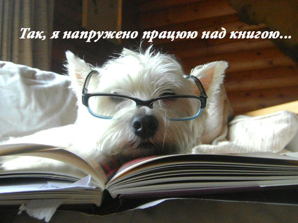 dog_glasses_book.jpg