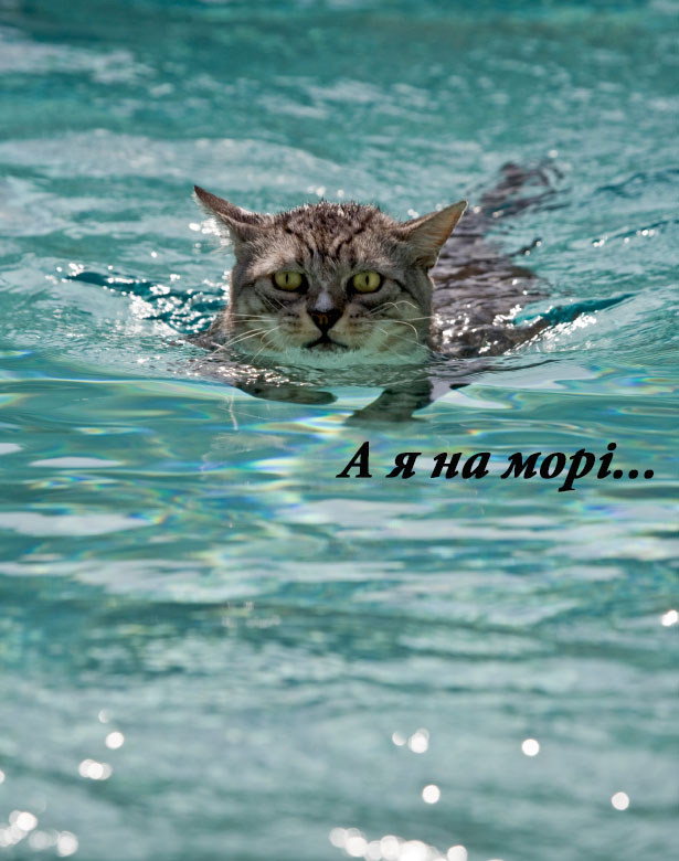 1swimming-cat.jpg